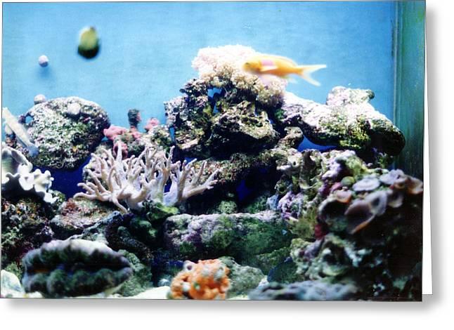 Salt Water Reef  Greeting Card by Steve  Heit
