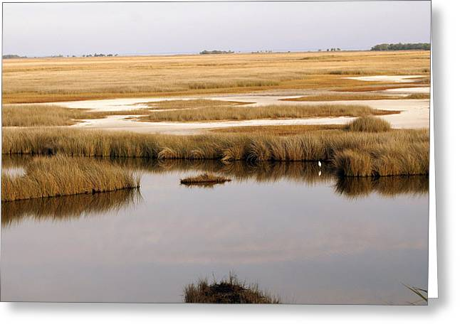 Saltwater Marsh Greeting Card by Marty Koch