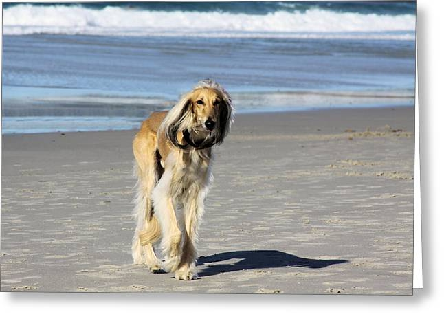 Saluki Beach Diva Greeting Card