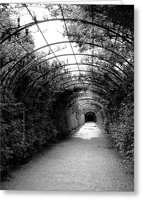 Salzburg Vine Tunnel - By Linda Woods Greeting Card