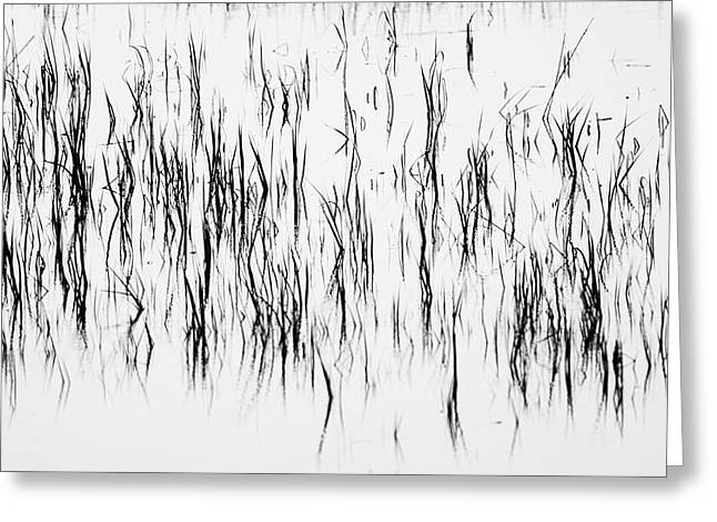 San Diego River Grass In Black And White Greeting Card