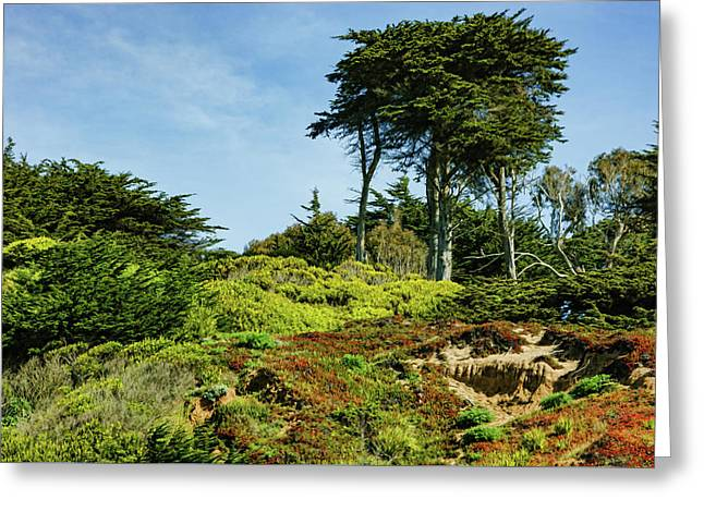 San Francisco Colorful Spring - Blooming Hillside With Pines Greeting Card by Georgia Mizuleva