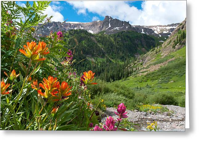 Greeting Card featuring the photograph San Juans Indian Paintbrush Landscape by Cascade Colors