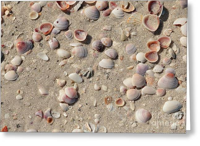 Sand And Shells Greeting Card