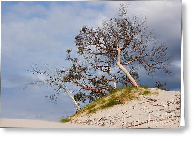 Sand Dune With Bent Trees Greeting Card by Lexa Harpell