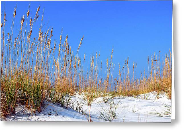 Sand Dunes And Sea Oats Greeting Card by James Kirkikis