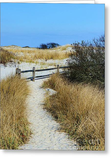 Sand Dunes At Island Beach State Park Greeting Card by Paul Ward