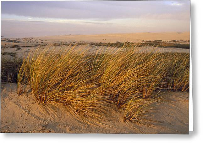 Sand Dunes At Oso Flaco Nature Greeting Card by Rich Reid