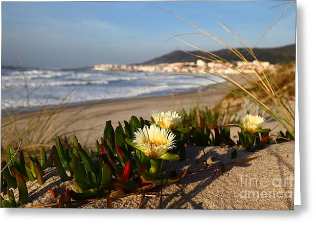 Sand Dunes In Northern Portugal Greeting Card