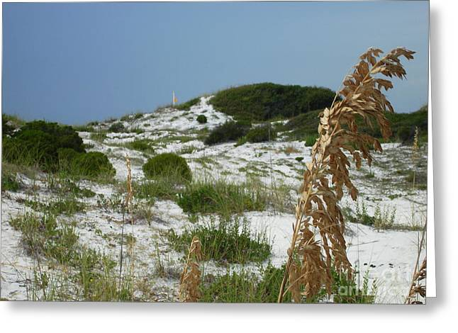 Sand Dunes Of Pcb Greeting Card by Anthony Allen