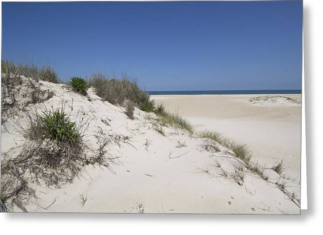 Sand Dunes On Assateague Island National Seashore - Maryland Greeting Card by Brendan Reals