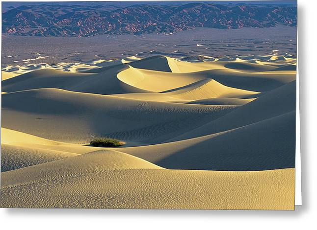 Sand Dunes Sunrise Greeting Card