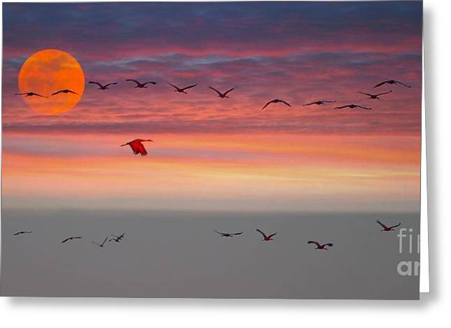 Sand Hill Cranes At Sunset/moonrise Greeting Card by Julie Dant
