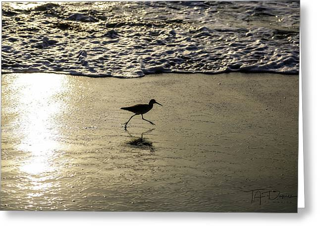 Sand Piper Dash Greeting Card