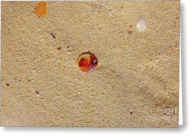 Greeting Card featuring the photograph Sand Shell Art by Francesca Mackenney