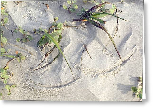 Sand Sumie One Greeting Card by Clyde Replogle