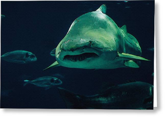Sand Tiger Shark Greeting Card by Pati Photography