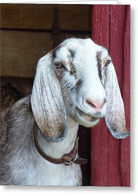 Greeting Card featuring the photograph Sandburg Goat by Sarah Crumpler