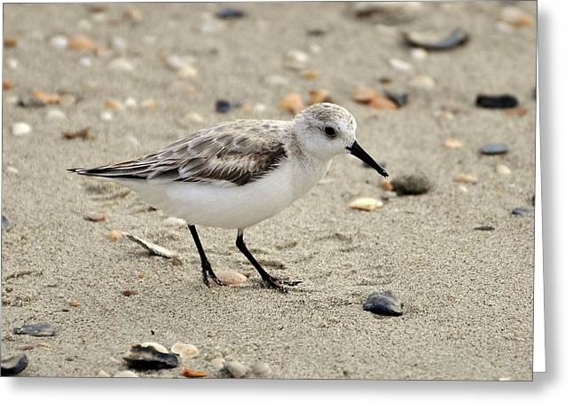 Sanderling Greeting Card by Al Powell Photography USA