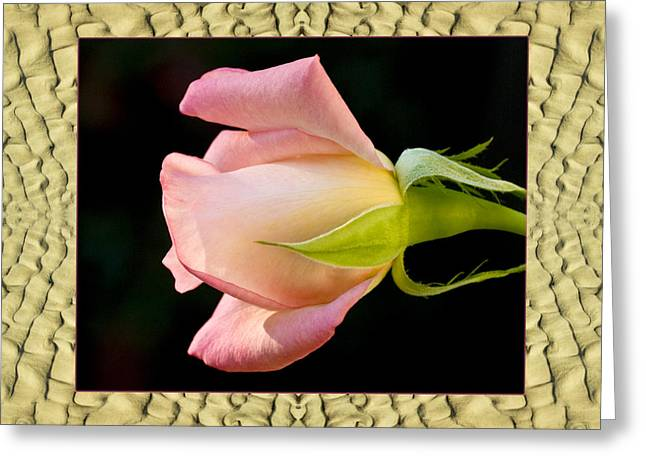 Greeting Card featuring the photograph Sandflow Rose by Bell And Todd