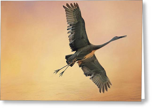 Greeting Card featuring the photograph Sandhill At Sunset by Donna Kennedy