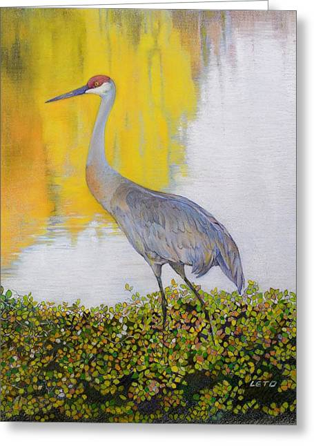 Sandhill Crane Greeting Card by Anthony Leto