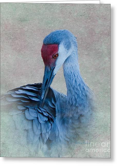 Sandhill Crane Greeting Card by Betty LaRue