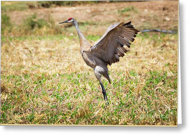 Greeting Card featuring the photograph Sandhill Crane Morning Stretch by Ricky L Jones