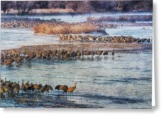 Sandhill Crane Platte River - Textured Greeting Card