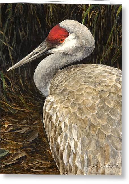 Greeting Card featuring the painting Sandhill Crane - Realistic Bird Wildlife Art by Karen Whitworth