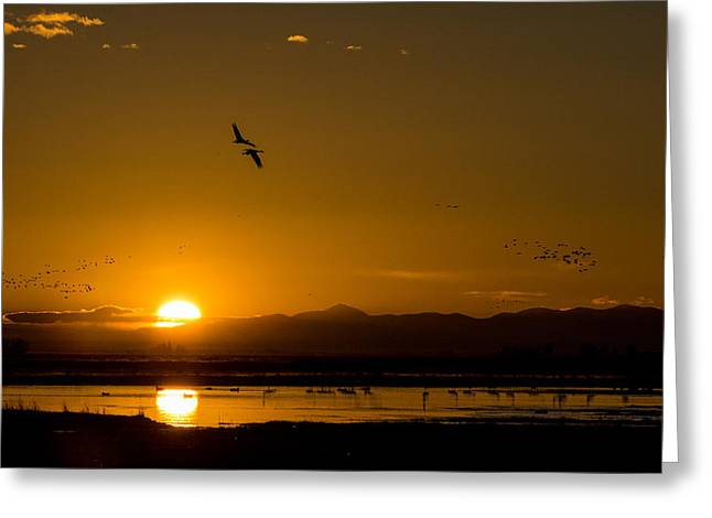 Sandhill Crane Sunrise Greeting Card