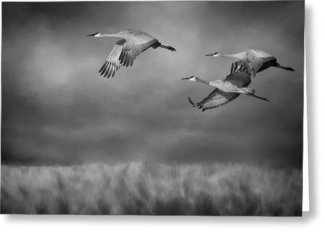 Sandhill Crane Trio In Flight II Greeting Card by SharaLee Art
