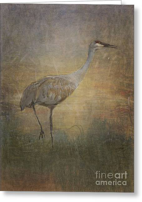 Sandhill Crane Watercolor Greeting Card by Janice Rae Pariza