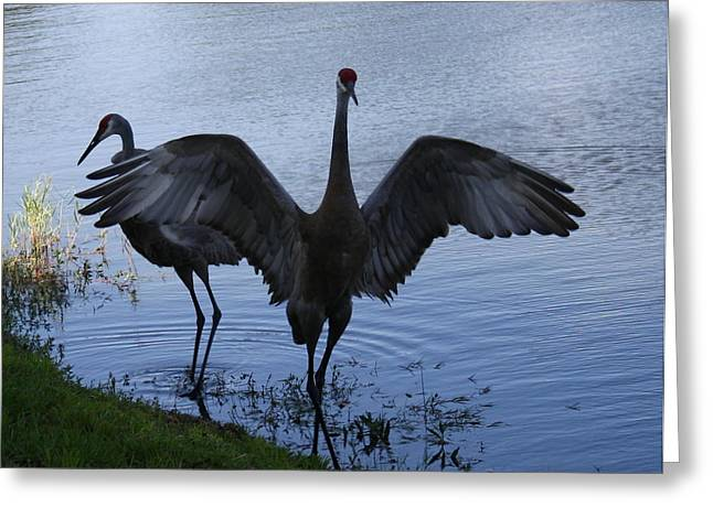 Sandhill Cranes 2 Greeting Card by Larry Underwood