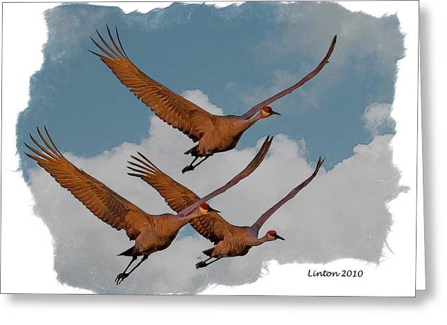 Sandhill Cranes 3 Greeting Card