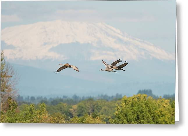 Sandhill Cranes And Mount St. Helens Greeting Card