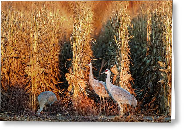 Sandhill Cranes At Sunrise Greeting Card