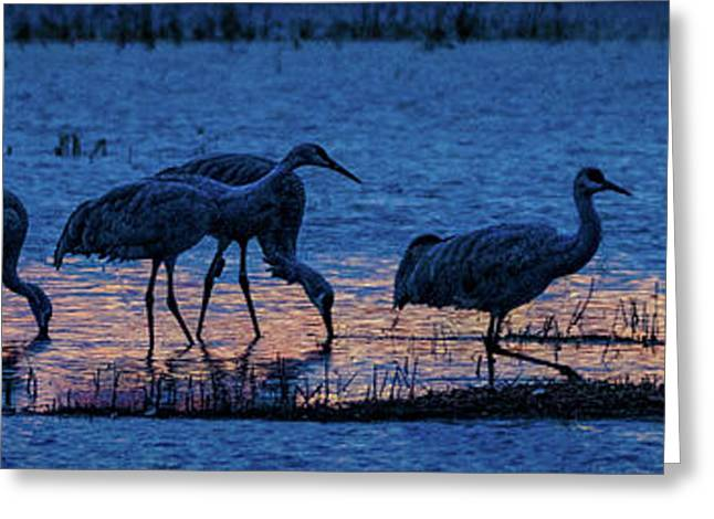 Sandhill Cranes At Twilight Greeting Card
