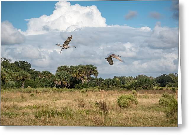 Sandhill Cranes Fly Greeting Card by Scott Mullin