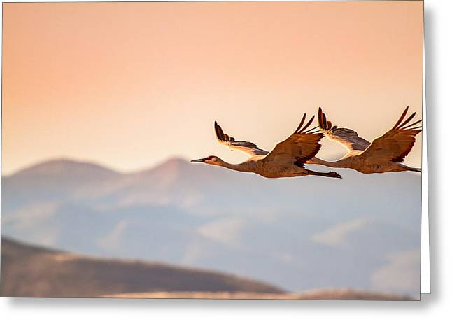 Sandhill Cranes Flying Over New Mexico Mountains - Bosque Del Apache, New Mexico Greeting Card by Ellie Teramoto