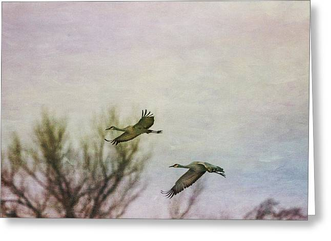 Sandhill Cranes Flying - Texture Greeting Card