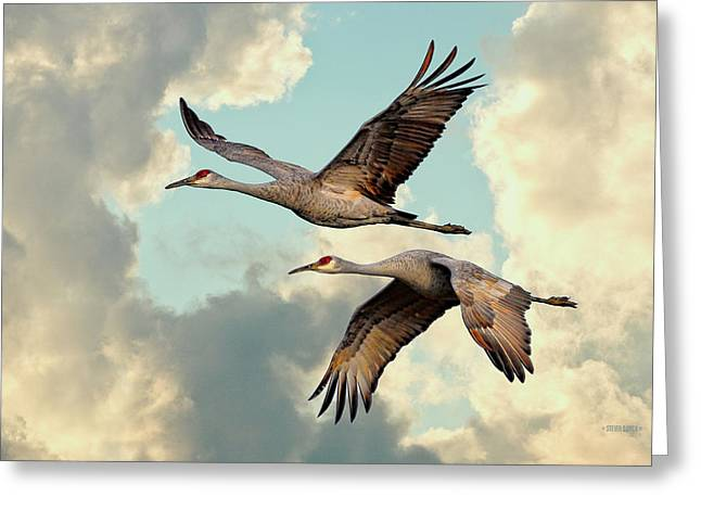 Sandhill Cranes In Flight Greeting Card by Steven Llorca