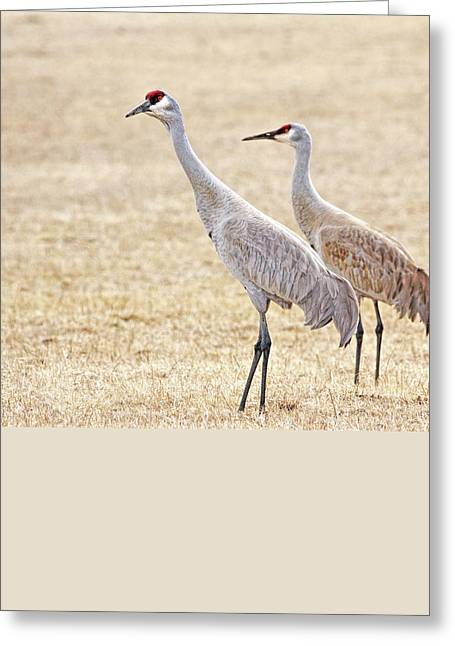 Greeting Card featuring the photograph Sandhill Cranes Of Montana by Jennie Marie Schell