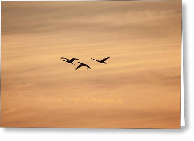 Sandhill Cranes Greeting Card by Happy Home Artistry