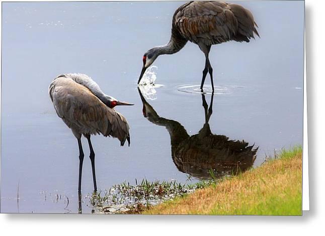 Sandhill Cranes Reflection On Pond Greeting Card
