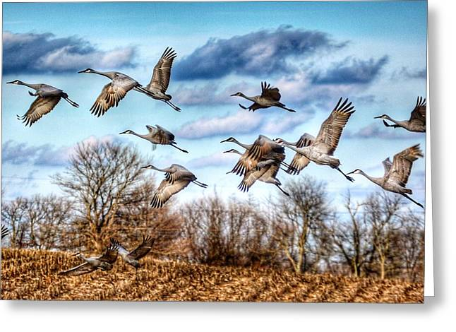 Sandhill Cranes Greeting Card by Sumoflam Photography