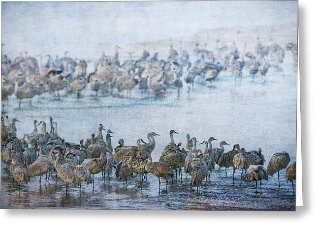 Sandhill Cranes Texture Greeting Card