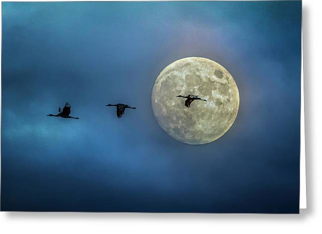 Sandhill Cranes With Full Moon Greeting Card