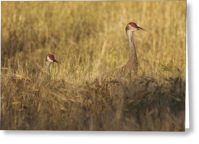 Sandhill Double Greeting Card