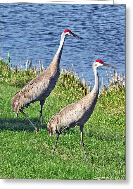 Sandhill Pair Greeting Card
